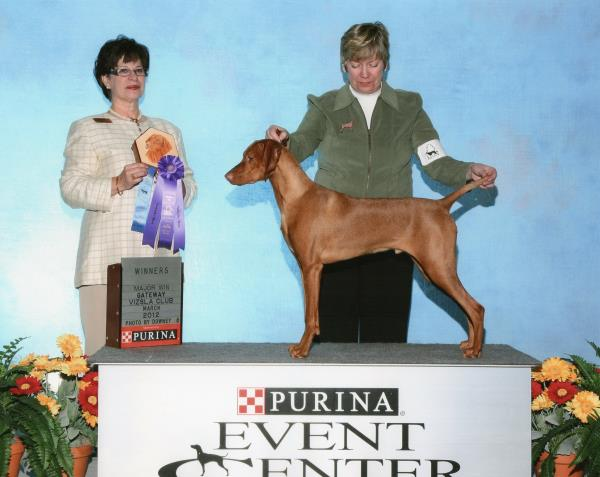 Winner Dog from the puppy class for a 4 point major at the Gateway Vizsla Specialty
